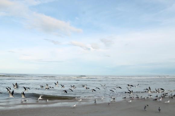 st augustine floride beach and bird