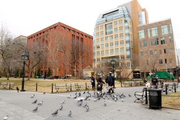 l'homme aux pigeons NYC