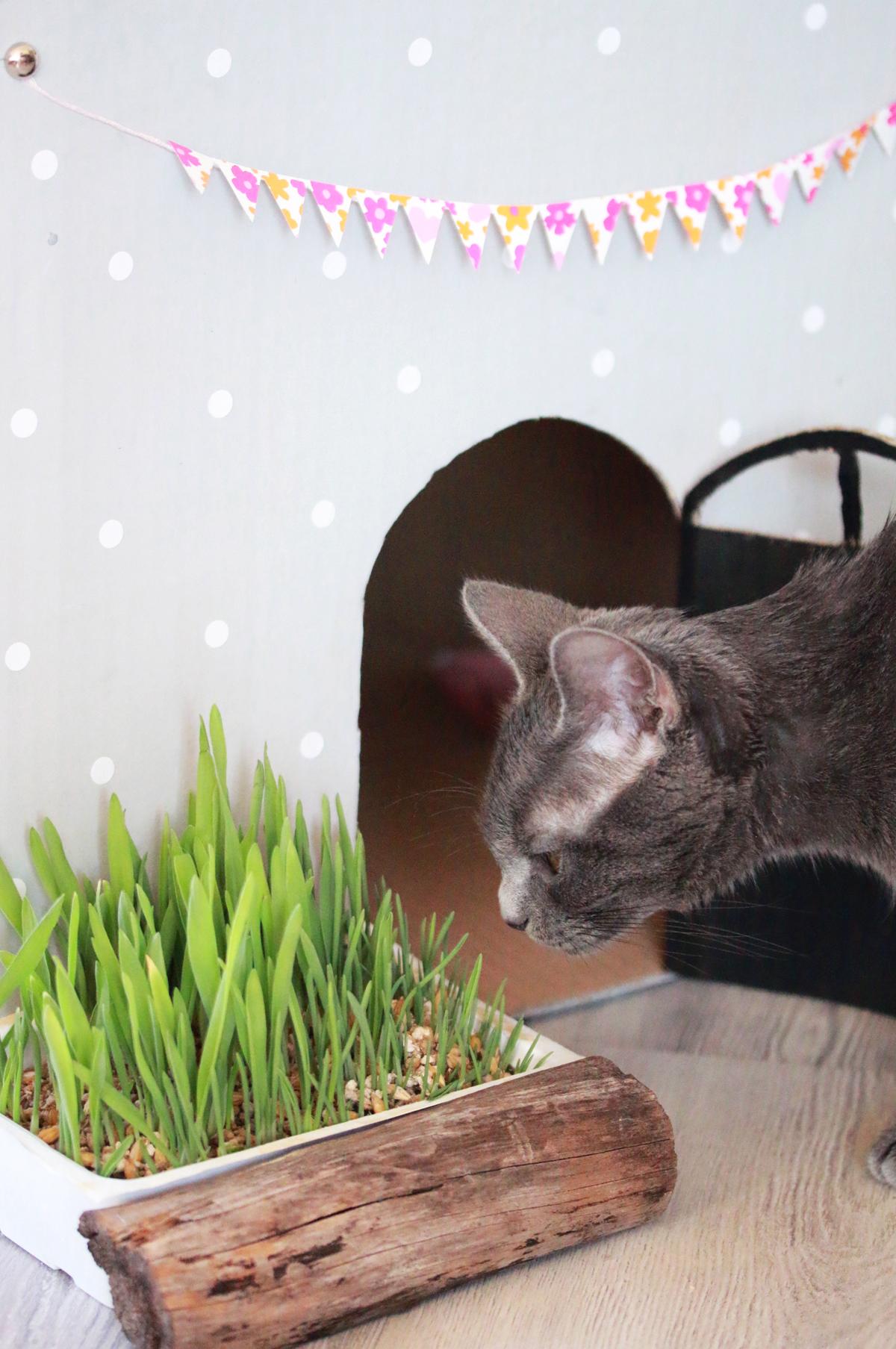 diy petit jardin pour chat