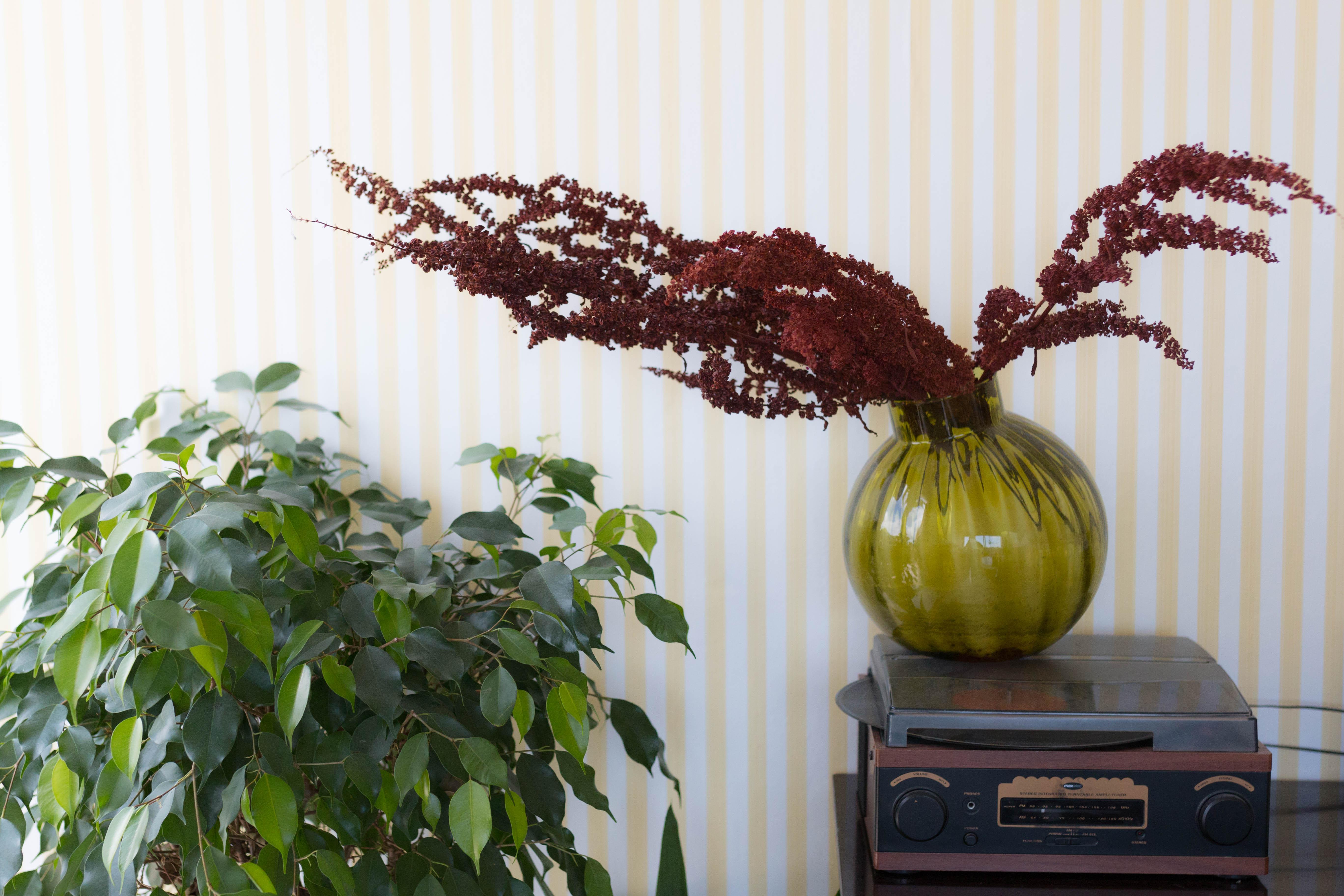 Tapisserie jaune rayée et plantes | SP4NK BLOG