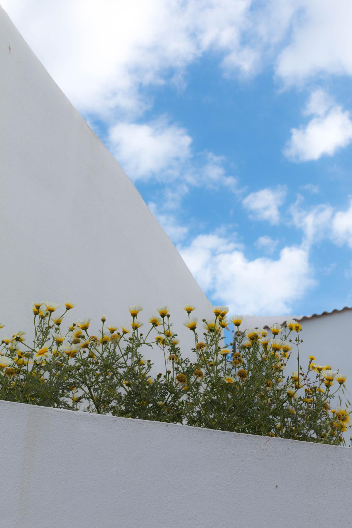 fleurs à majorque | SP4NK BLOG