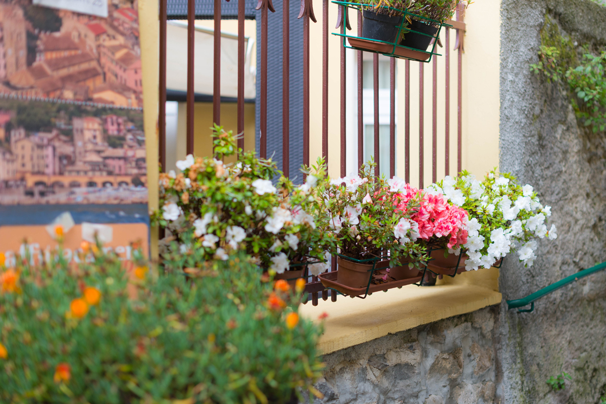 fleurs de Cinque terre | SP4NK BLOG