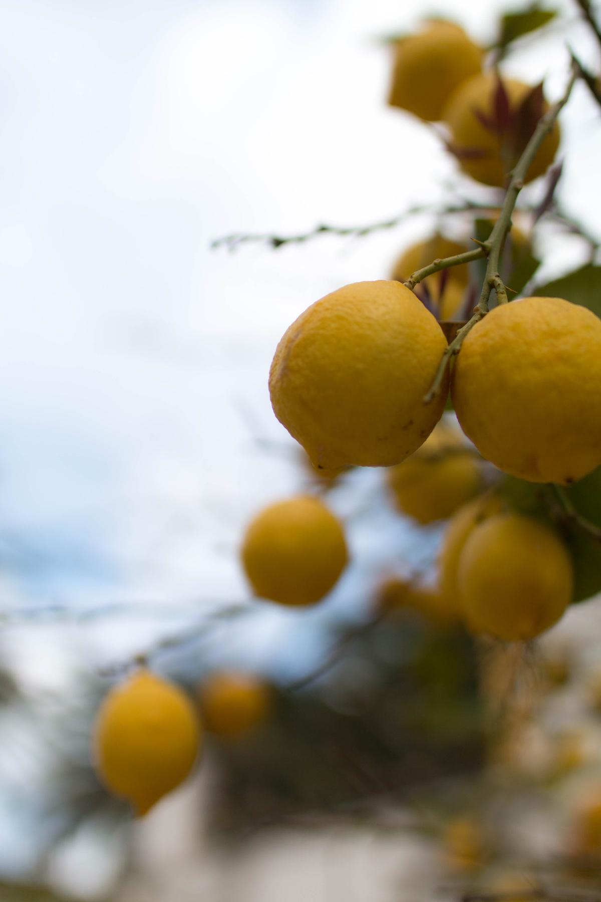 les citrons  ile de minorque  | SP4NK BLOG