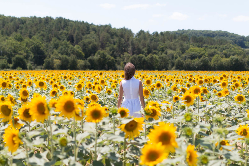 White dress in the sunflowers | SP4NK BLOG