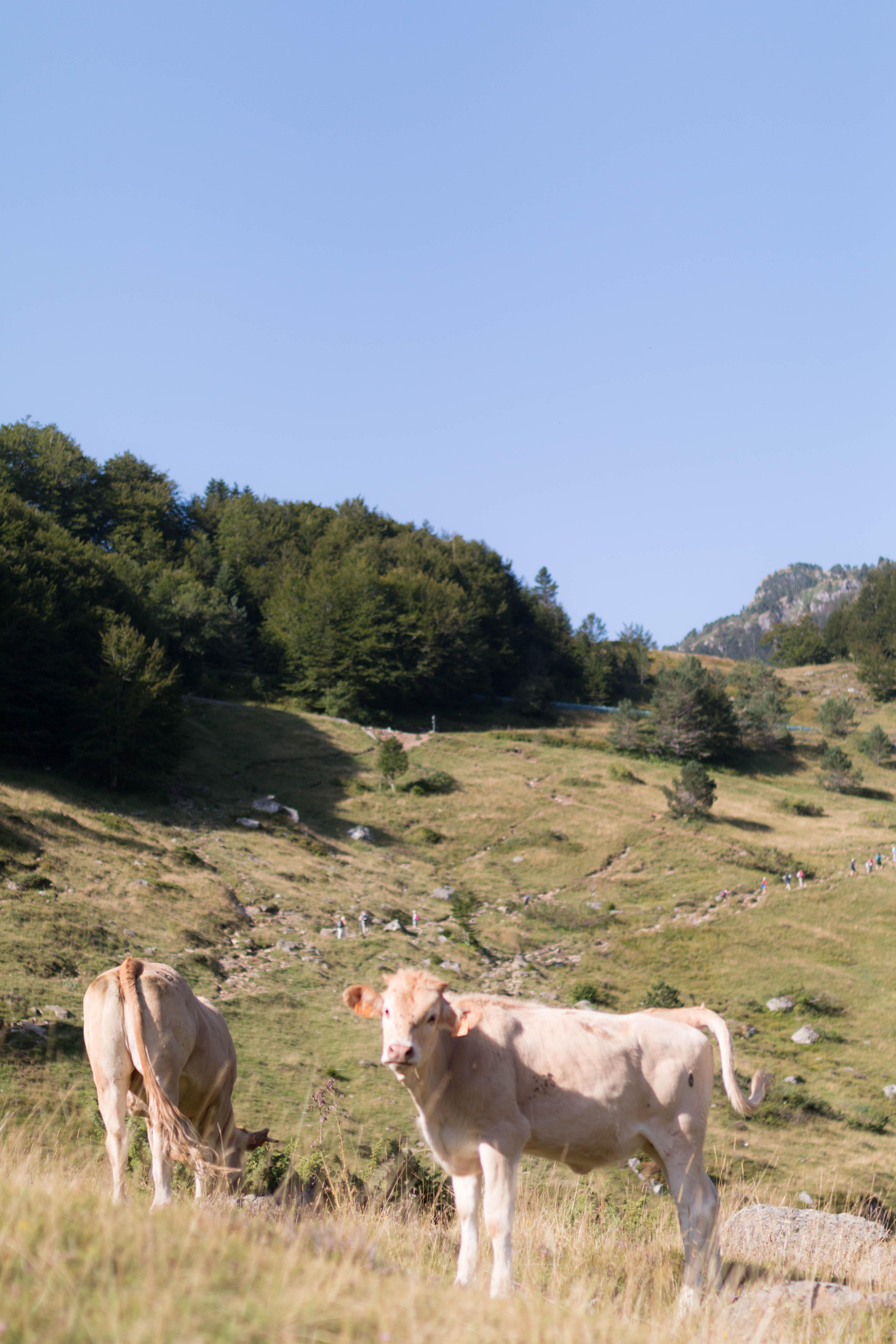 Pyrénées randonnées le tour des lacs d'ayous 8 | SP4NK BLOG