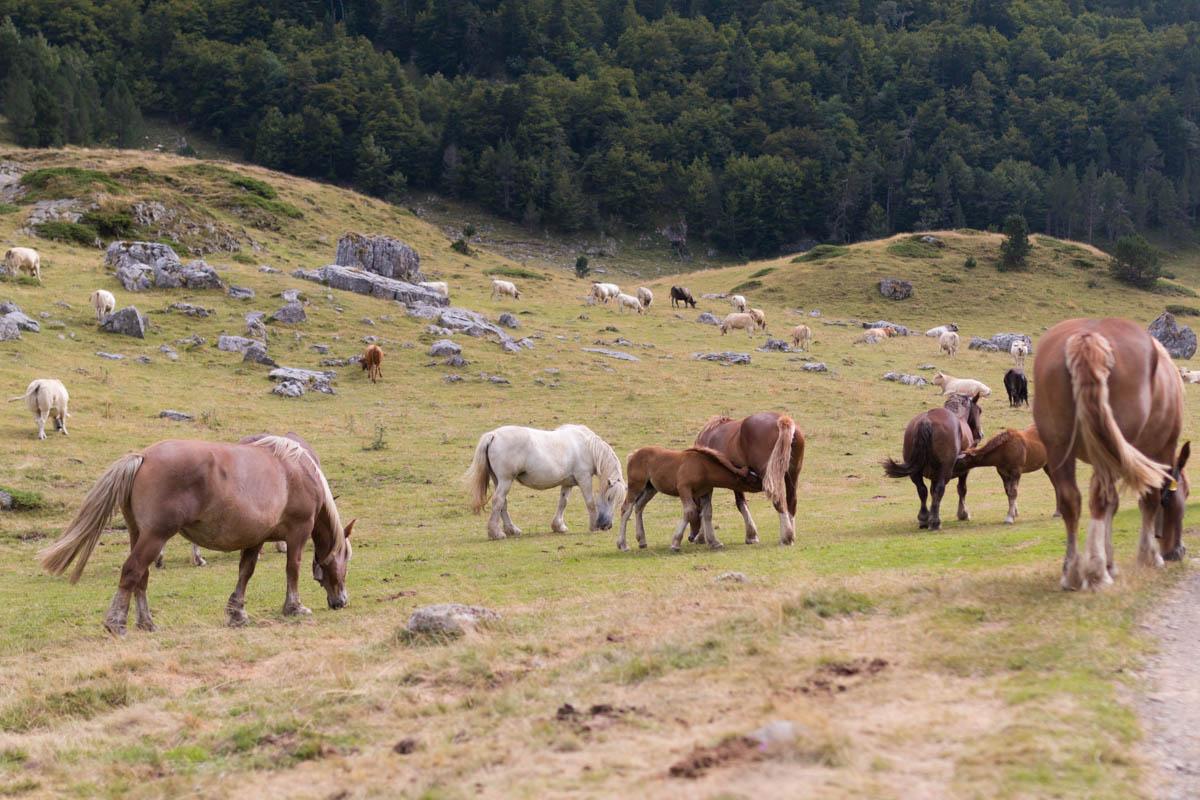 Pyrénées tour des lacs d'ayous les chevaux  | SP4NK BLOG