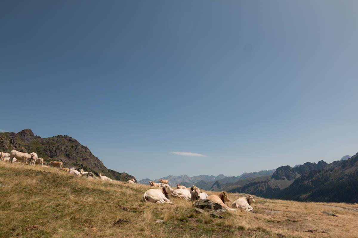 Pyrénées tour des lacs d'ayous les vaches | SP4NK BLOG