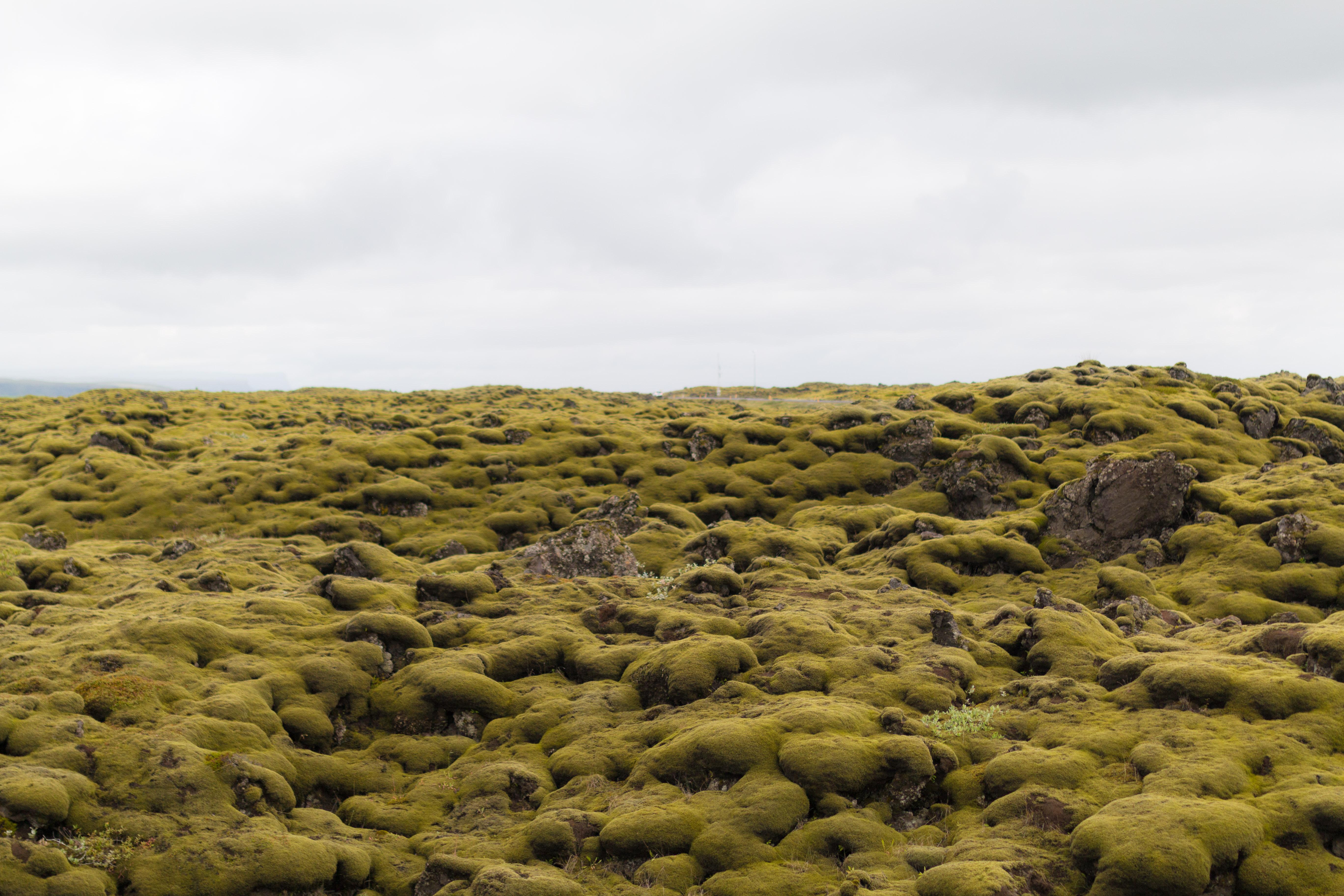 voyage en islande pendant 8 jours avec ma maman I Sp4nkblog_-35