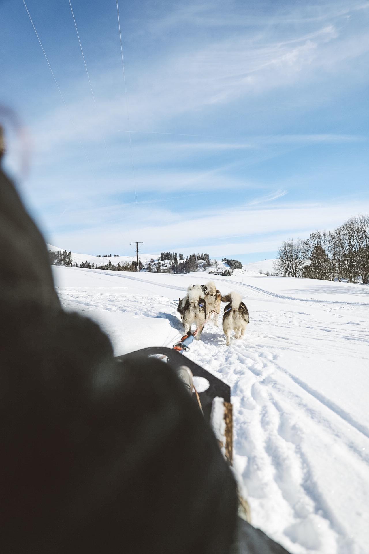 balade en chien de traineau dans les alpes