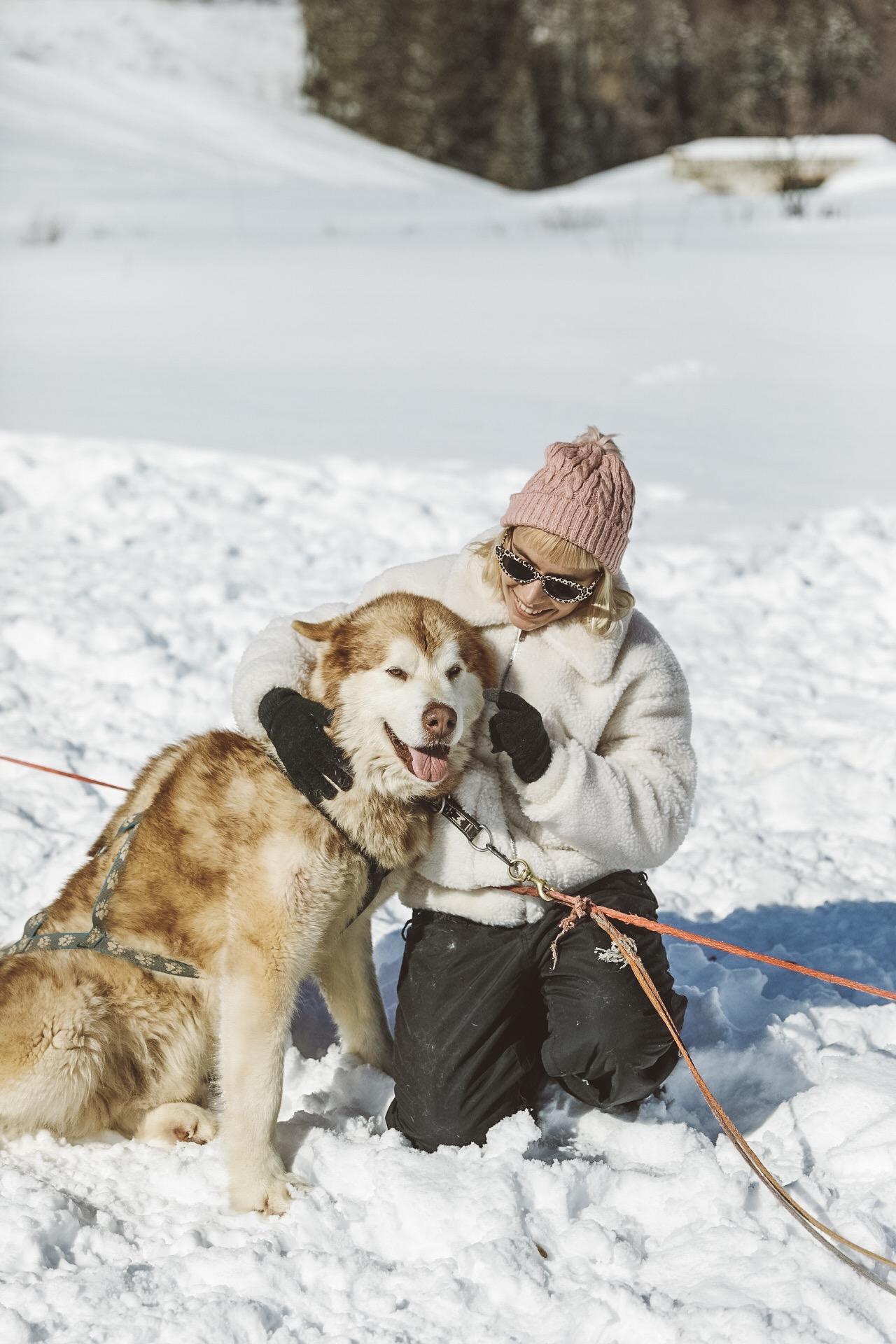 chien de traineau dans les alpes