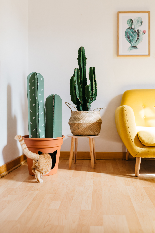 diy-chat-cat-cactus-maison-house-2