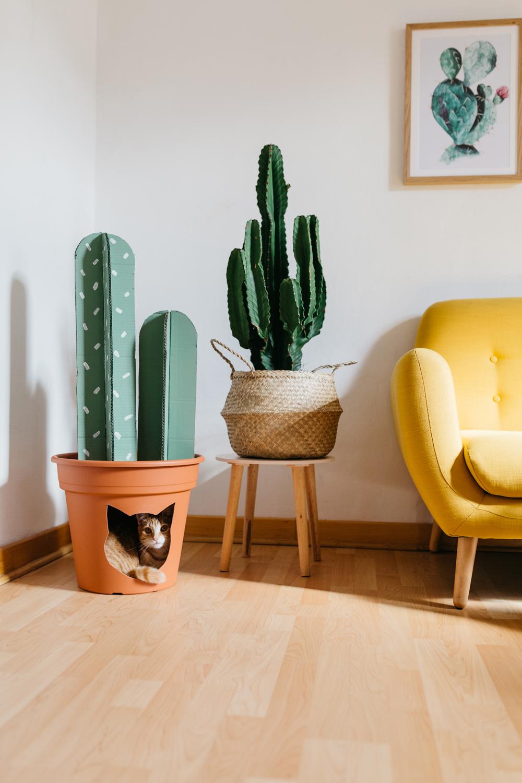 diy-chat-cat-cactus-maison-house